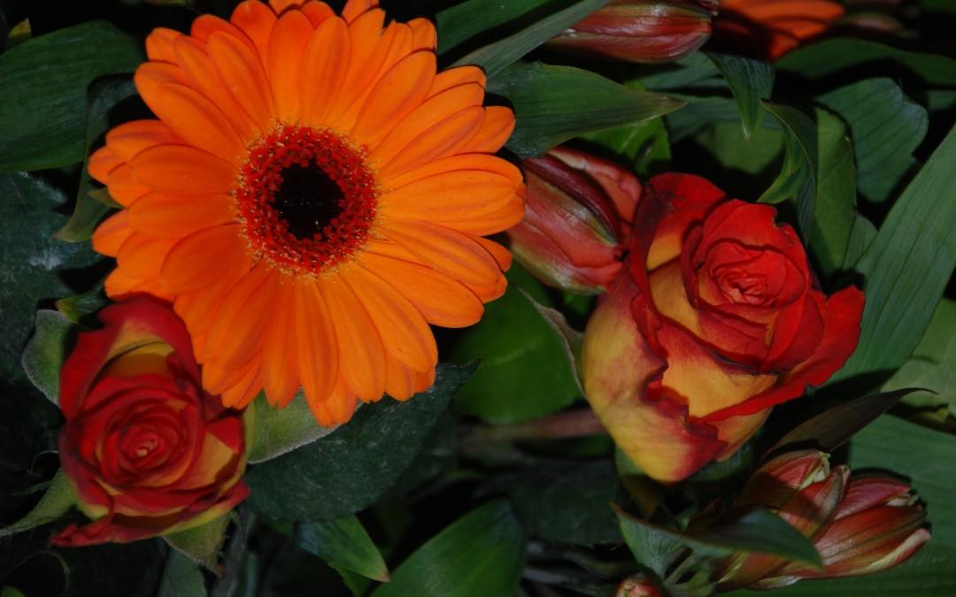 Een kleurrijke bloemenavond